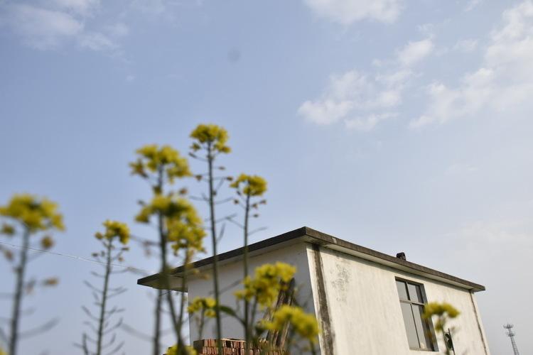 宁夏10条线路入选国家乡村旅游学习体验线路