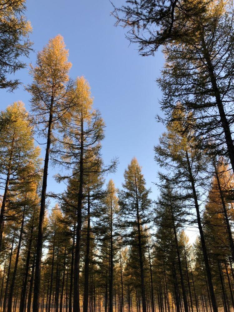 呼和浩特林草部门多举措保护古树名木