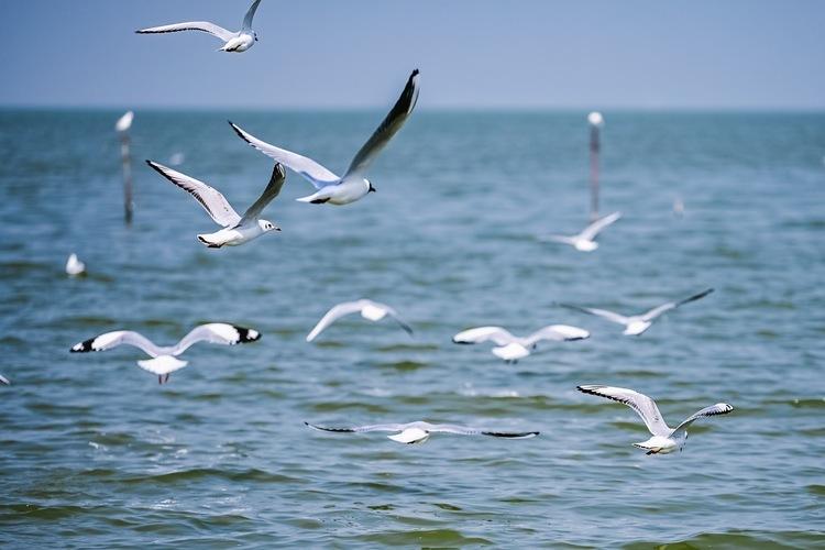 广东新增4个国家级湿地公园 深圳华侨城国家湿地公园上榜