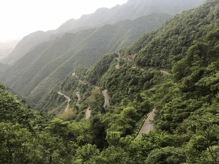云南有机茶园认证面积超81万亩
