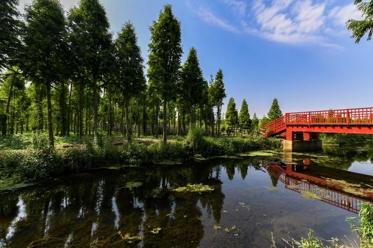五甲塘智慧湿地公园 海河带状公园7月底建成