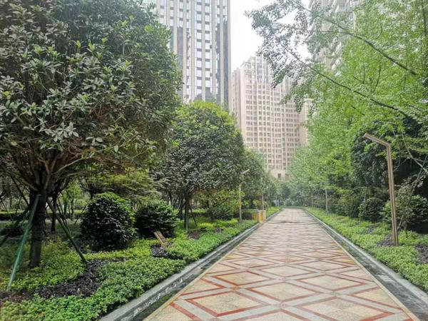 成都长冶南阳御龙府项目二期小区内部绿化。中房报记者刘洪材/摄